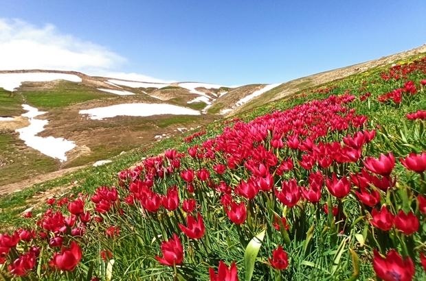 Doğa harikası Eğrigöl'de açan çiçekler eşsiz görüntüler oluşturuyor
