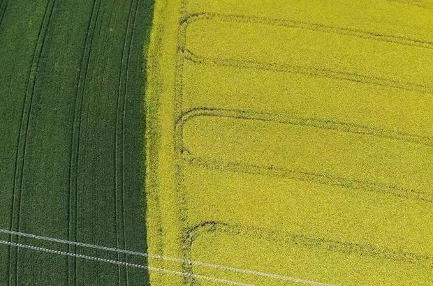 (Özel) Tekirdağ'da 'Sarı bahar' Sarı ile yeşilin savaşı drone ile görüntülendi