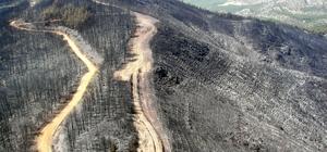 İzmir ve Manisa'da küle dönen ormanlık alanlar artık yemyeşil Geçtiğimiz yıl İzmir ve Manisa'da toplam 285 orman yangını çıktı, 4 bin 200 hektar alan alevlere teslim oldu