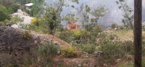 Seydikemer'de zeytin bahçesinde çıkan yangın söndürüldü