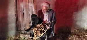 Şanlıurfa'da foseptik çukuruna düşen keçi kurtarıldı