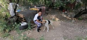 Antalya'da ölüme terk edilen köpeklere mahalleli sahip çıktı