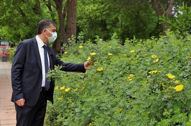 Sarıgüllük Mahallesi sarı güllerle donatıldı