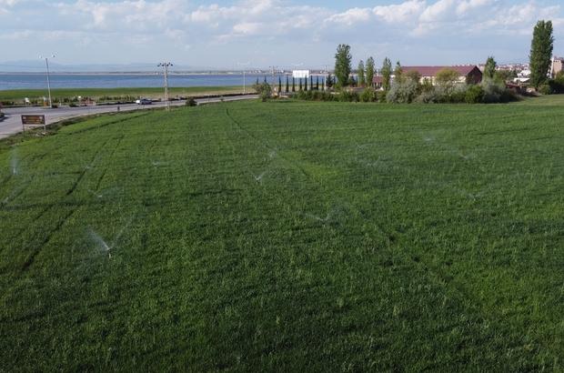 Yağışlar gelmeyince göl havzasında üreticiler tarlalarda sulama yapmaya başladı