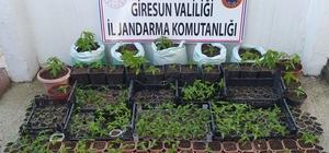 Jandarma ve Emniyetten uyuşturucu operasyonu