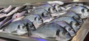Tezgahları kültür balıkları süslüyor Avlanma yasağında kültür balıklarına talep arttı