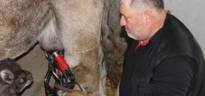 Pandemi şifa deposu deve sütüne talebi artırdı