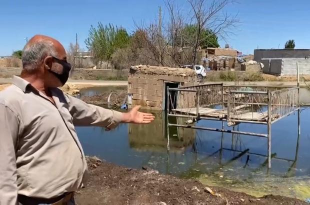 Suruç'ta Venedik'i andıran görüntüler İnsanların kuraklık çektiği aylarda evi ve arazisi su içinde kalıyor