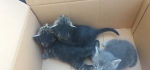 Mahsur kalan kedilerin yardımına itfaiye koştu
