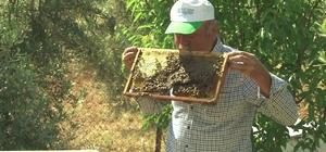 """Arı dolu çıtayı öpüp, arıları eliyle tutuyor Antalyalı arıcının arılarla sıra dışı dostluğu Koruyucu kıyafet giymeden arıcılık yapıyor: """"Çok istiyorum beni 3-5 tane arının sokmasını"""""""