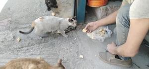 Aç kalan kedileri vatandaşlar elleriyle besledi
