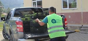 Akseki ve Gündoğmuşlu çiftçiye 90 bin fide dağıtıldı