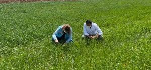 Aslanapa'da ekili alalarda fonolojik gözlem çalışmaları