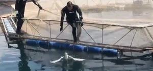 Dalgıç polisler bu kez bir kuşu kurtardı Balık ağlarına takılan kuşu dalgıç polisler kurtardı Polisten 'kuş kurtarma' operasyonu