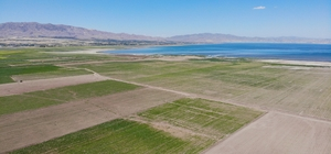 12 yıl önceki kuraklık tekrar baş gösterdi, kuruyan baraj havzasında tarıma başlandı Elazığ'da Keban Baraj Havzası'nda suyun kuraklık nedeniyle 2,5 kilometre çekilmesiyle birlikte ortaya çıkan yüzlerce dönüm arazide tarım tekrar başladı Tarlaları traktörle süren çiftçiler, mısır arpa, buğday, pancar gibi bir çok ürünü ekerek ekonomik kazanç elde etmek için emek vermeye başladı