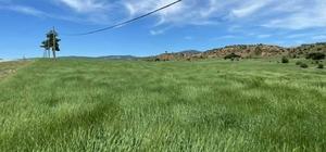 Aslanapa'da kuraklık tehlikesi iddiası