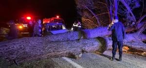 Otomobil devrilen ağaca çarptı: 3 yaralı