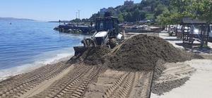 Kandıra'dan alınan kumlar plajlara seriliyor