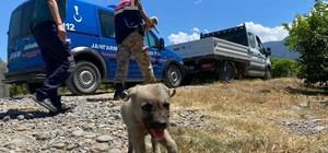 Jandarma sokak hayvanları için sahada