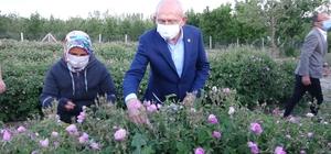 CHP Genel Başkanı Kılıçdaroğlu, Isparta'da işçilerle gül topladı
