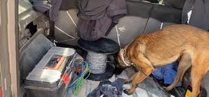 Narkotik Dedektör köpeği 'MİA'dan zehir tacirlerine geçit yok