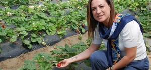 """Selçuk'un gözbebeği Efes Tarlası Yaşam Köyü açılıyor Efes Tarlası Yaşam Köyü, """"yaşamın doğal akışını alkışlamaya"""" hazır Efes Tarlası Yaşam Köyü'nün açılışını, CHP Genel Başkanı Kemal Kılıçdaroğlu yapacak"""