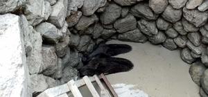 Manisa'da kuyuya düşen yaban domuzları kurtarıldı