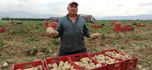 Ödemişli üretici bahar patatesinden umduğunu bulamadı