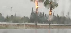 Yıldırım düşen palmiye ağaçları alev alev yandı Antalya'da şaşkınlık oluşturan görüntü Yağan yağmur altında ağaçlar böyle yandı