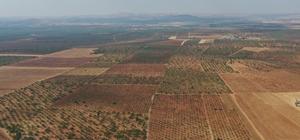 İpekyolu Kalkınma Ajansı, Barak Ovası'na hayat verecek Kurulacak GES ile enerji maliyetleri düşecek Bin çiftçi ucuz elektrikle sulama yapacak
