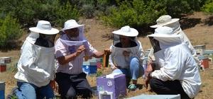 """Manisa arıcılığına değer katacak proje Ana arı ve sütü üretimini öğreniyorlar Türkiye'nin ana arı ihtiyacını giderecekler Manisa Bal Kooperatifi Arıcılık Danışmanı Hüseyin Balkaya """"Her yıl 4 milyon ana arıya ihtiyaç var"""""""
