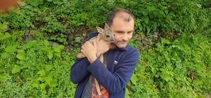 Minik yavruyu köpeklerin elinden kurtardı