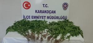 Elazığ'da uyuşturucu ile mücadele : 1 gözaltı