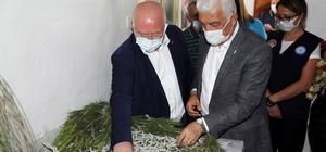 Muğla'da İpekböcekçiliği gelişiyor Muğla Büyükşehir Belediye Başkanı Dr. Osman Gürün ve Menteşe Belediye Başkanı Bahattin Gümüş, Bayır Mahallesinde ilk defa ipekböcekçiliği yetiştiriciliği yapan üreticileri ziyaret etti.