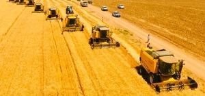 Dünyanın en büyük çiftliğinde buğday hasadı başladı Eşsiz görüntüler oluşturan hasat, drone ile havadan görüntülendi