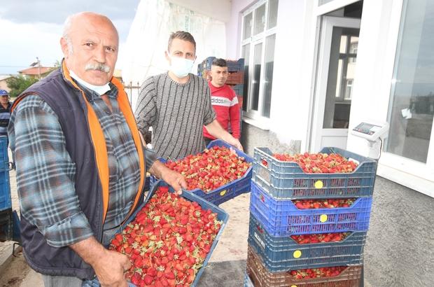 Konya'da üreticiler coğrafi tescilli çileğin alım fiyatının düşmesine tepkili Marketlerde 15-20 lira arasında satılan coğrafi işaretle tescillenen Hüyük çileğinin alım fiyatının 4-5 liraya düşmesi üzerine üreticiler duruma tepki gösterdi