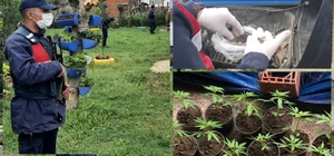 Jandarma ekipleri Sakarya'da suça geçit vermiyor Tarihi eser ve yasadışı kenevir operasyonu: 107 parça tarihi eser ile 30 kök kenevir bitkisi ele geçirildi