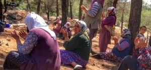 Menteşe'de köylüler yağmur duasına çıktı