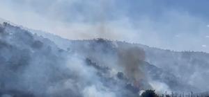 İzmir'de makilik alandaki yangına havadan ve karadan müdahale
