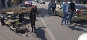 Sürücüsüz at kaza yaptı