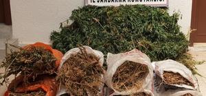 Hatay'da 10 bin kök kenevir bitkisi ele geçirildi Olayla ilgili 6 kişi gözaltına alındı