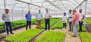 Ceylanpınar, Bitki Üretim Serası ile ile güzelleşiyor Sera'da 95 bin bitki yetiştirildi
