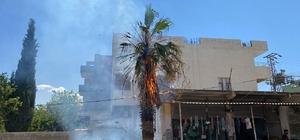 Dev palmiye ağacı alev topuna döndü Ağaçtan yükselen alevler dükkanlara sıçramadan söndürüldü