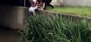 Kanala düşen köpek için seferber oldular İnsanlık ölmemiş dedirten olay, vatandaşlar köpeği işte böyle kurtardılar
