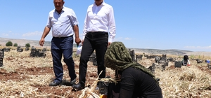 Başkan Doğru'dan sarımsak üreticilerine uyarı