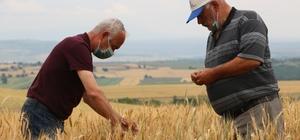 Edirne'de çiftçiler buğday harmanı sezonundan umutlu