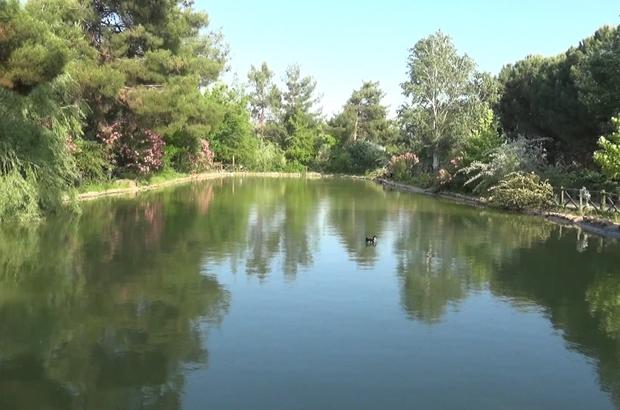 Botanik bahçe 300 bitkiye ev sahipliği yapıyor Kahramanmaraş'taki 11 hektarlık bahçede yüzlerce çeşit bitki, görsel şölen sunuyor