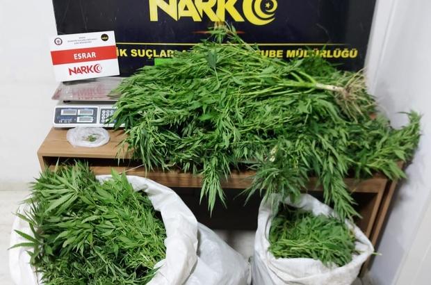 Operasyon yapılan evden kenevir serası çıktı Konya'da düzenlenen uyuşturucu operasyonunda evde kenevir serası oluşturulduğu ortaya çıkarken, 16 kilo 950 gram esrar, 100 kök kenevir bitkisi ele geçirildi
