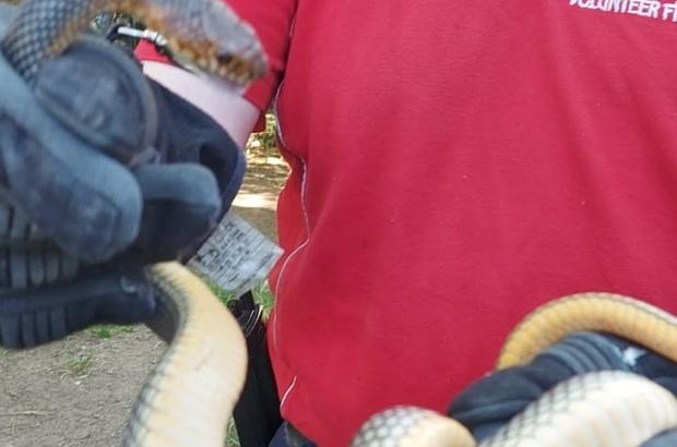 Eve giren yılanı itfaiye yakaladı