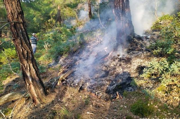 Eskişehir'de ormana düşen yıldırım yangına neden oldu